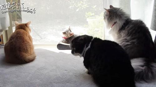 3匹の成猫