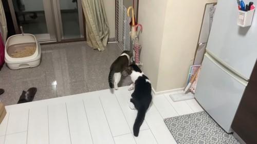 玄関に集まる猫