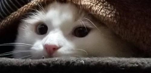 狙いを定める白猫