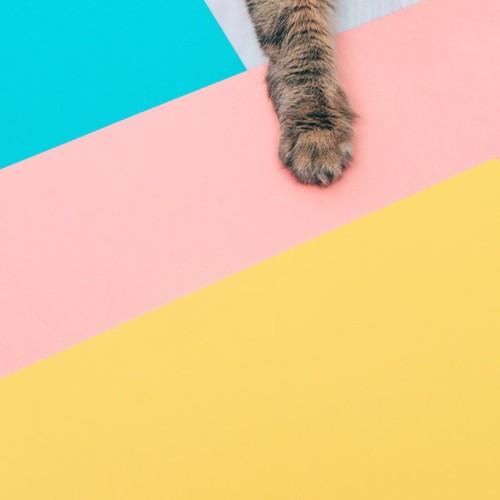 カラフルな床と猫の手