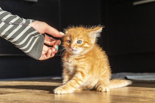 不信感を持つ猫