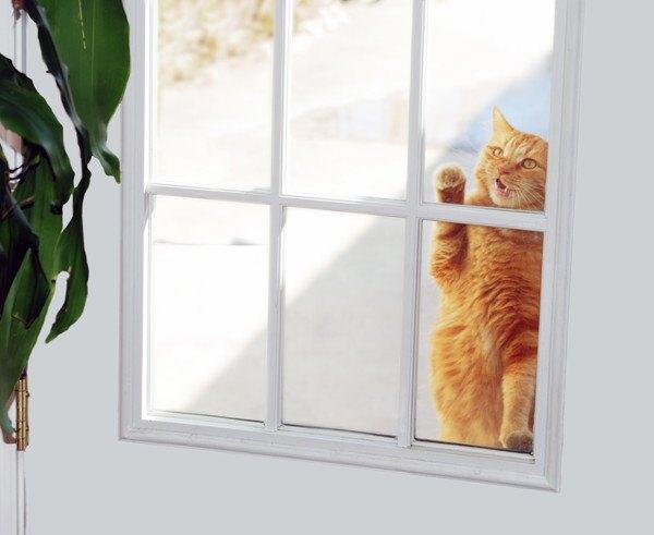 窓から見えるキジ茶色の猫