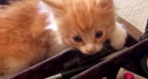 メークボックスと子猫