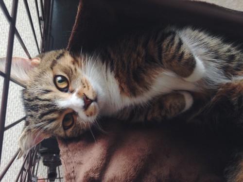 ケージの中の子猫の写真