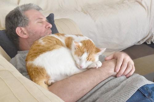 体の上で寝る猫
