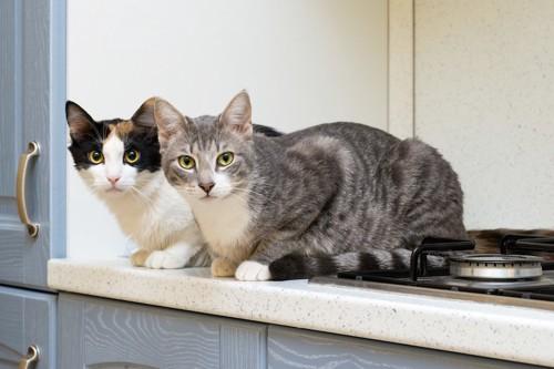 キッチン台に乗ってこちらを見る二匹の猫