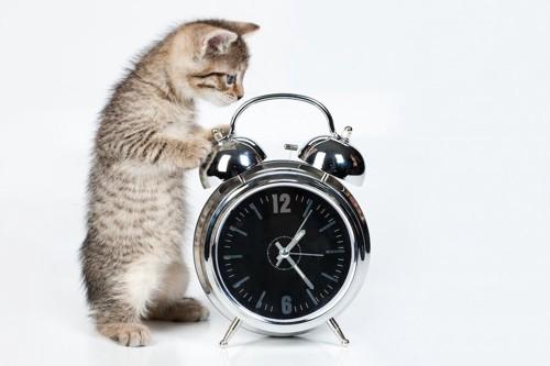 目覚まし時計に手をかける子猫