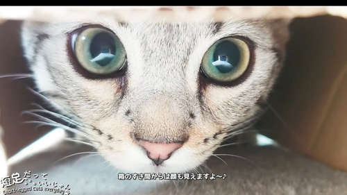隙間から見た猫の顔