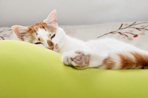 クッションの上の半開きの目の猫