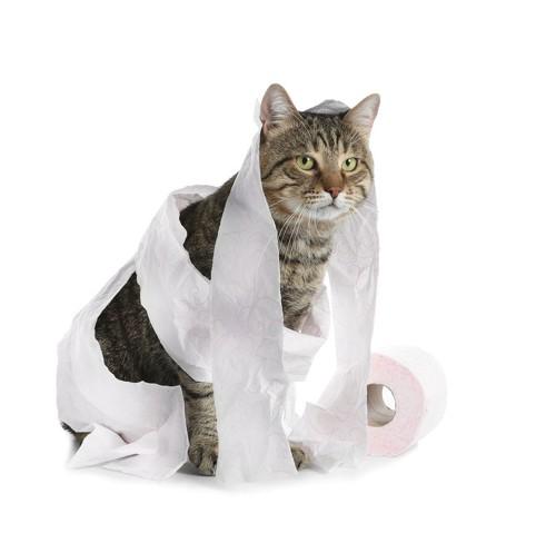 トイレットペーパーを体に巻きつけた猫
