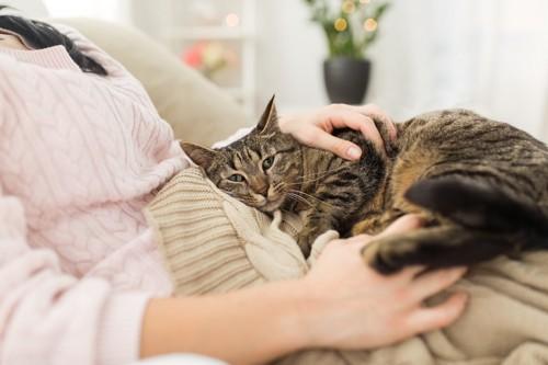 甘える猫と人