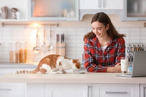 食べる猫を見守る人