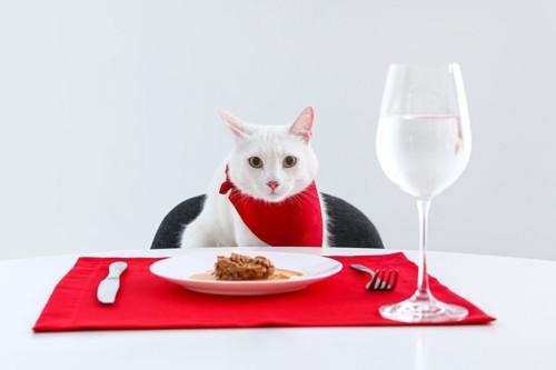 ナプキンをして食事をする前の猫