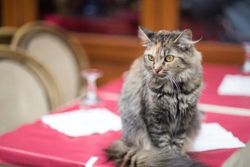 テーブルの上に座る猫
