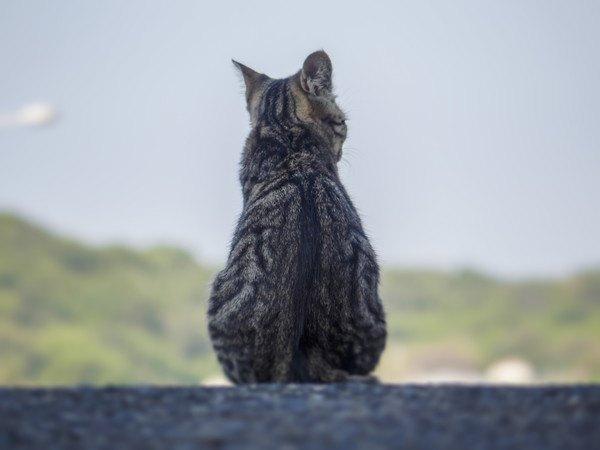 外で背を向ける猫