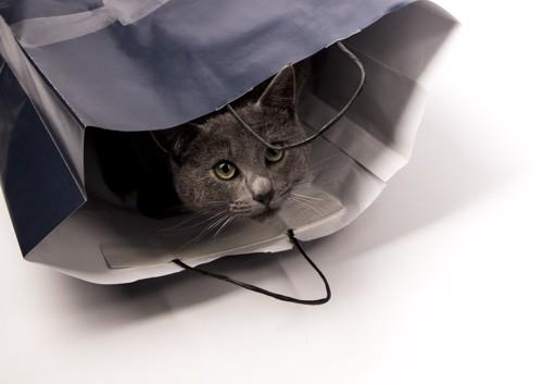 黒い紙袋の中の灰色猫