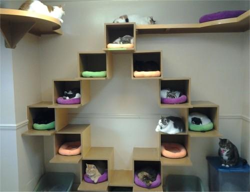 猫の箱に入る猫のインテリア