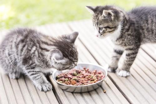 餌を分けている子猫