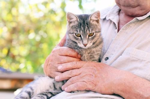 シニアに抱かれる猫