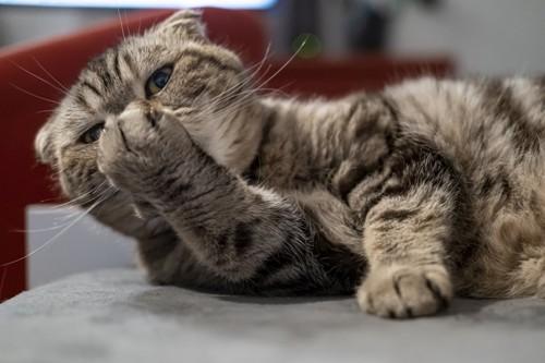 鼻に手を充てる猫