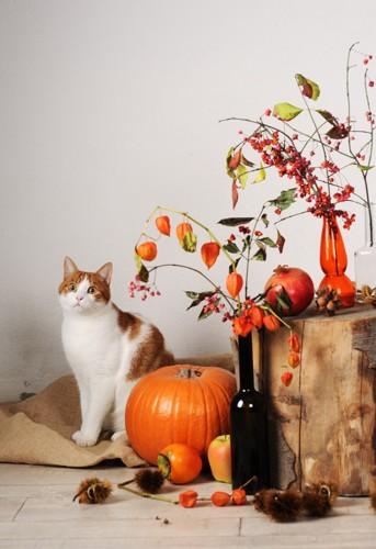 猫と柿とかぼちゃ