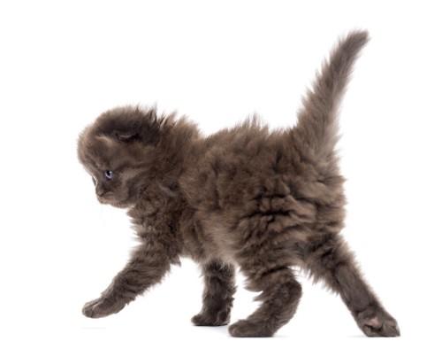 歩く子猫の後ろ姿