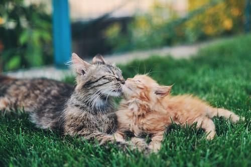 鼻キスする猫達