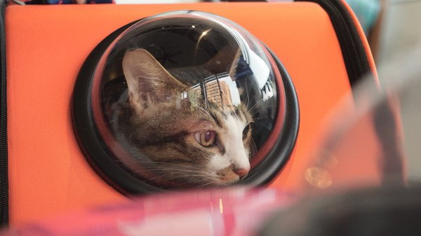 宇宙船のキャリーバッグに入る猫