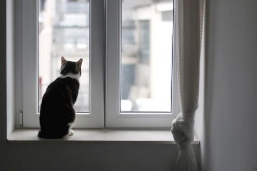 窓辺に座る猫の後ろ姿