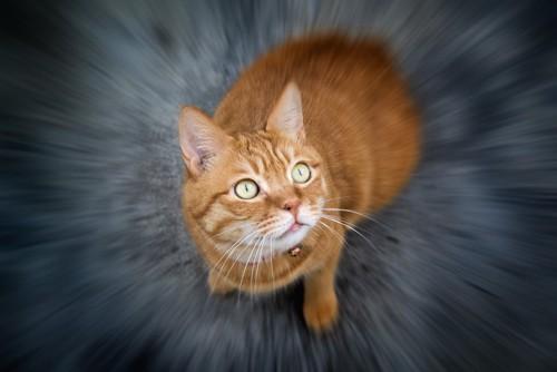驚いて固まる茶トラ猫