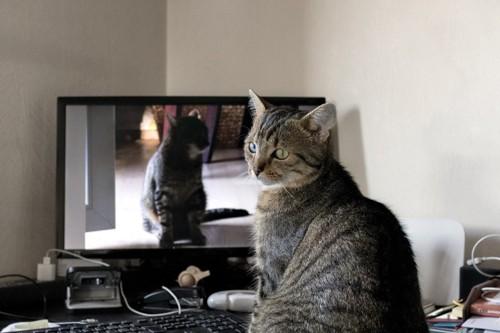 テレビの前の猫
