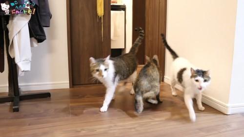 勢いよく出てくる2匹の猫