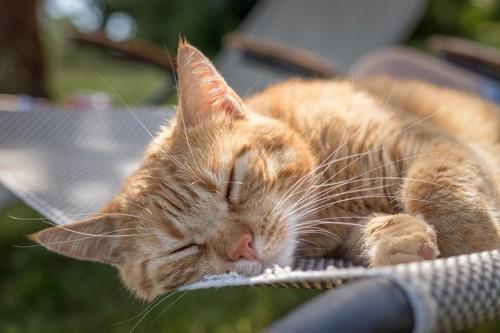 お昼寝中の茶トラ猫