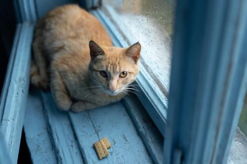 微妙な場所にいる猫