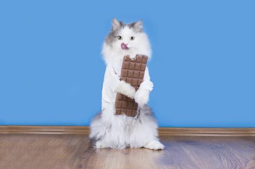 チョコレートを持って立つ猫