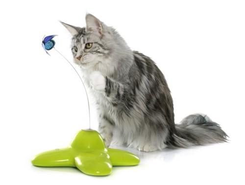 オモチャで独り遊びをする猫