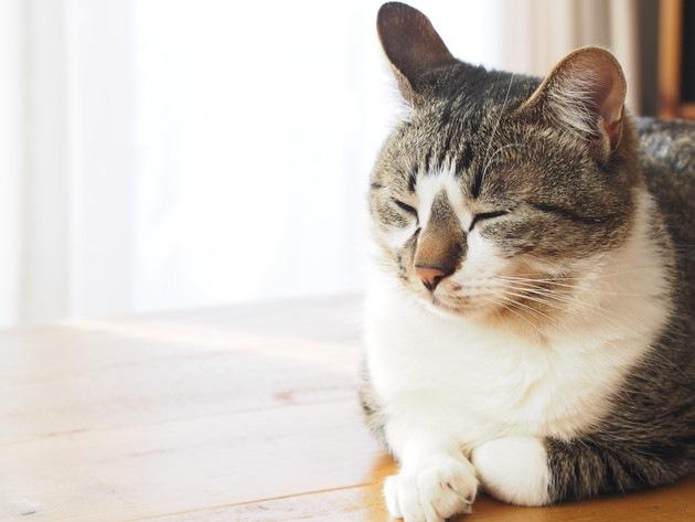 風邪をひいている窓際の猫