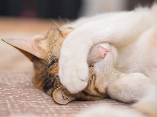 目隠しして寝る猫