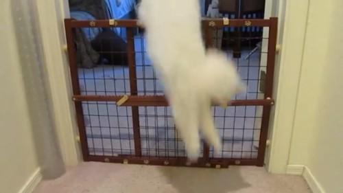 策を超える猫