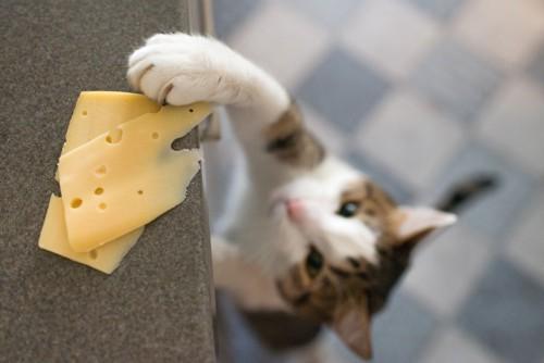 チーズを狙う猫
