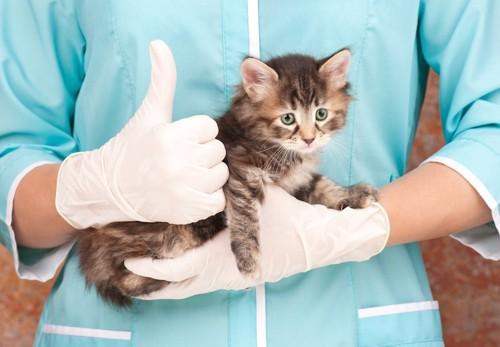 獣医師に抱かれた子猫