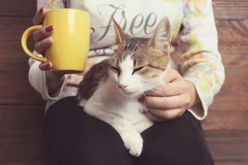 カップを持った飼い主の膝の上でくつろぐ猫