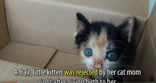 段ボール箱に入った小さな三毛猫