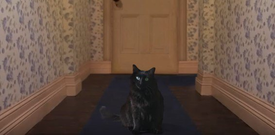 廊下に座るアウルキティ