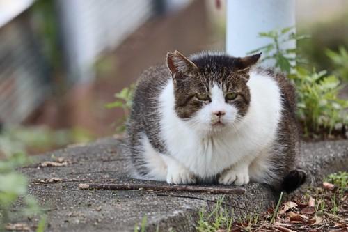 蹲って元気のない様子の野良猫