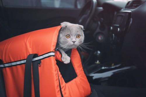 車内でキャリーから顔を出す猫