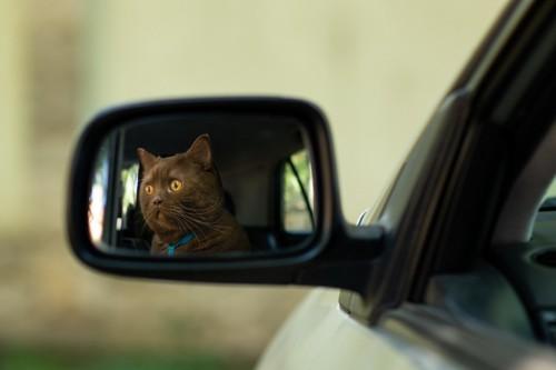 車のサイドミラーに映る猫の顔