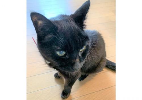 20歳の黒猫