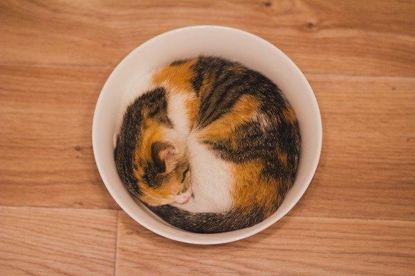 丸いお皿の中に猫