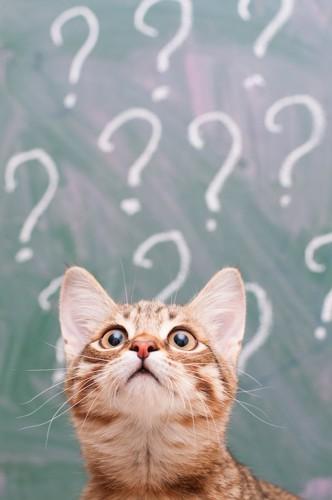 クエスションマークと上を見ている子猫